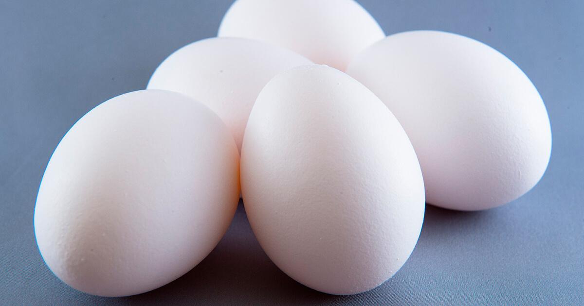 受精卵にも「殻」があるの?