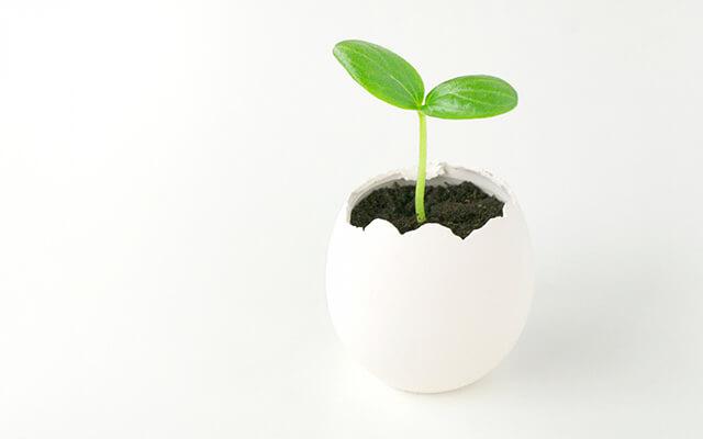 卵子はどうやって育つのか
